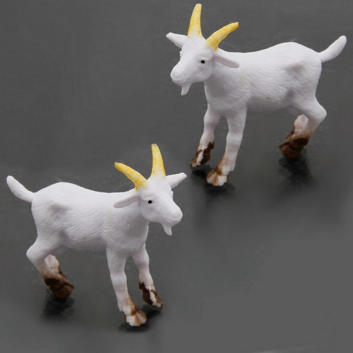 Miniature Goat Domastic Animal